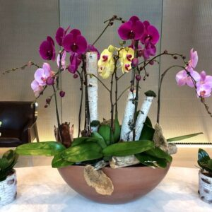 luxury-orchids