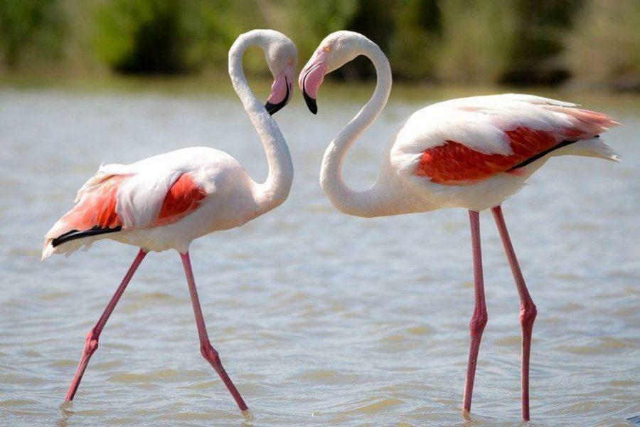 Art Boutique Pink Flamingo